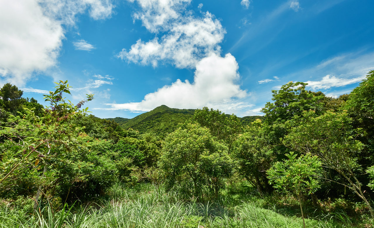 Top of mountain - mountain in distance - trees and tall grass - blue sky and clouds
