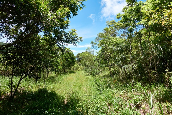 Old mountain road, now covered in grass - trees on either side - blue sky and clouds