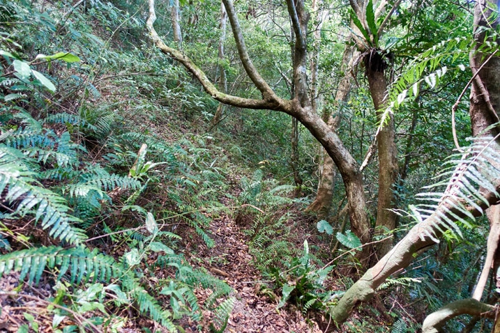 Small mountainside trail - trees on right