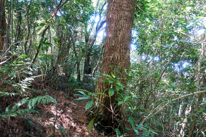 Many small trees in forest - one large tree in center
