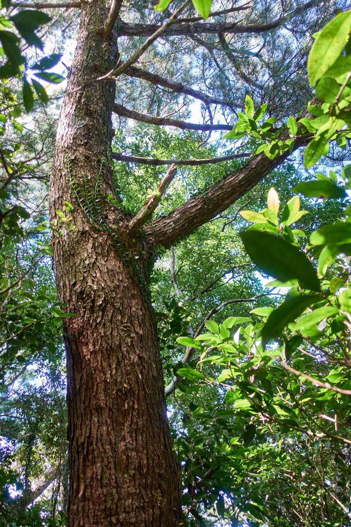 Looking up at tree