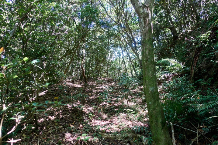 Old abandoned mountain dirt road - many trees on either side