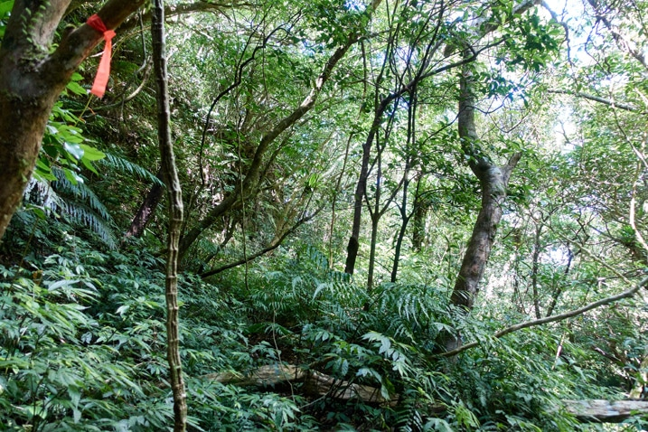 Looking up at mountainside forest
