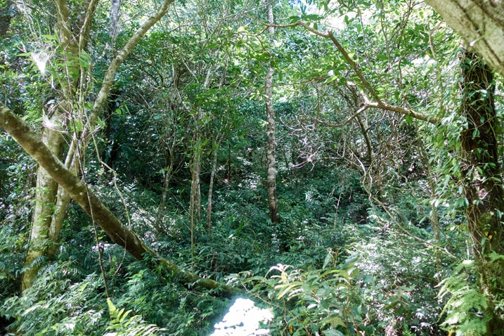 Mountain forest - many trees and plants
