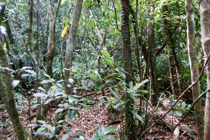 Mountain forest - many trees - yellow ribbon tied to one tree
