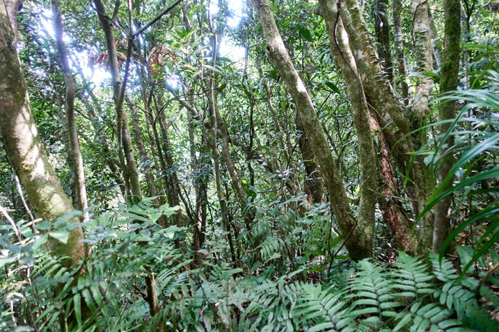 Many trees and plants in mountain forest