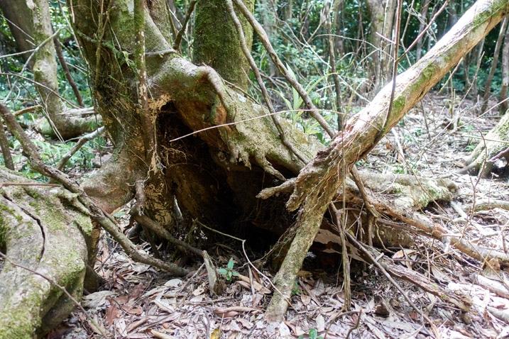 Closeup of dead tree