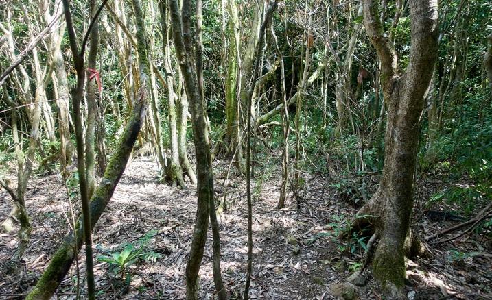 Many dead trees