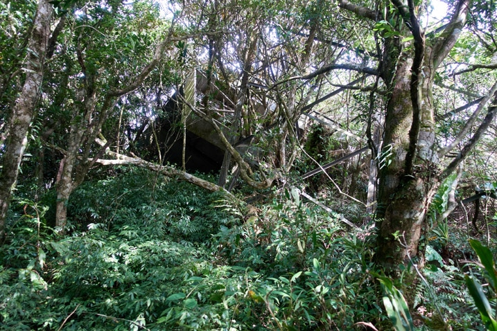 A broken passive repeater on mountain top surrounded by trees and plants