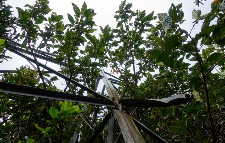 Looking up at broken passive radio repeater railing