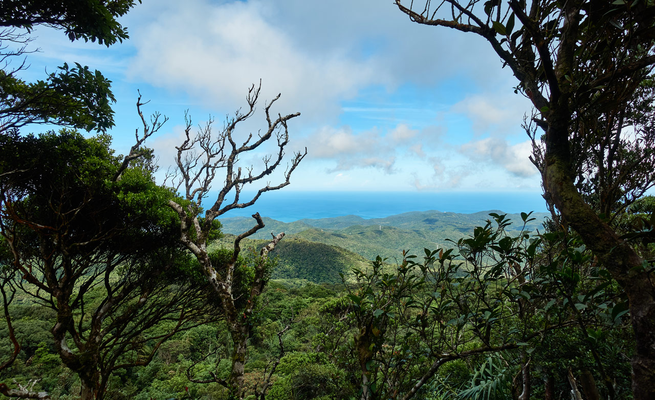 Ocean in distance - low mountains - blue sky with clouds - trees in foreground
