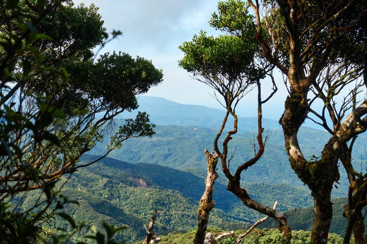 Looking at mountains in the distance - trees in foreground