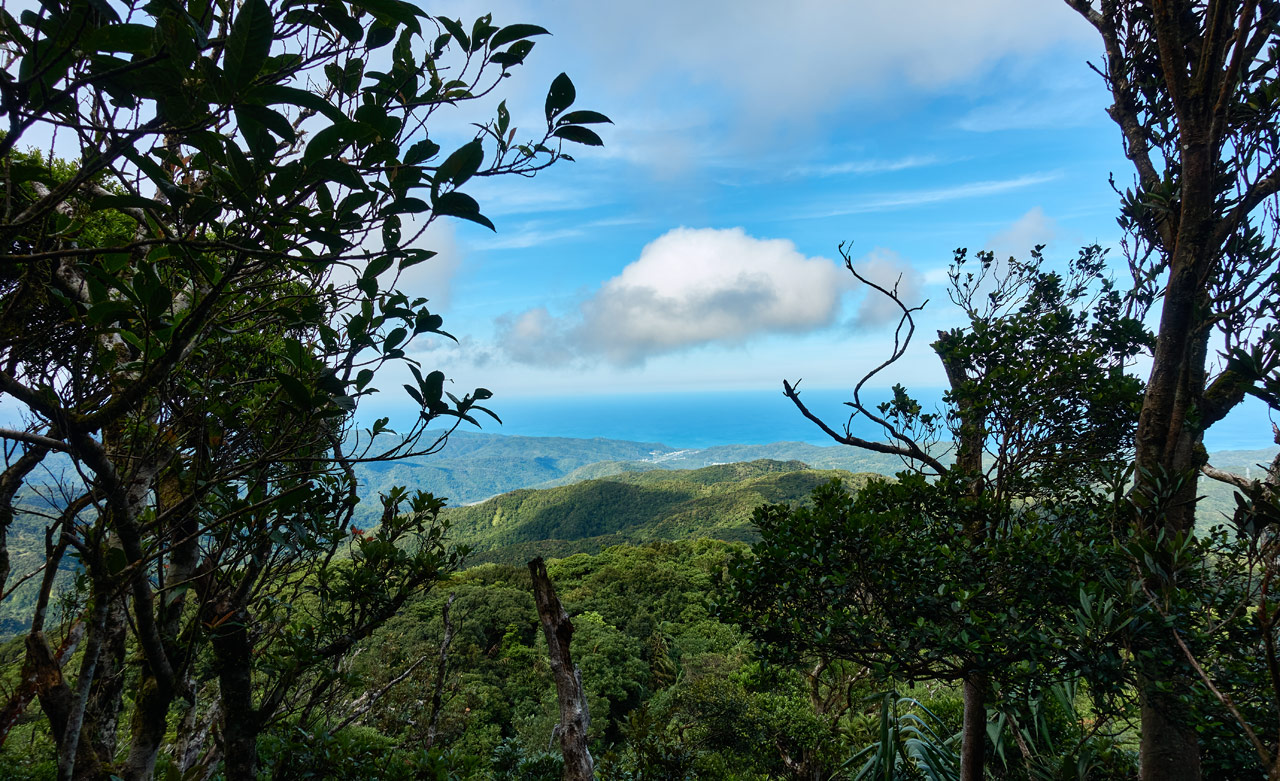 Ocean and mountains in the distance - trees in foreground