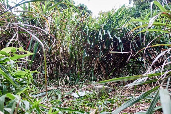 QiLuZhiKeShan - 耆路知可山 triangulation stone - tall grass behind it