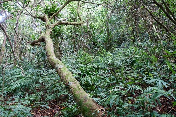 Tree halfway fallen - many trees and plants around
