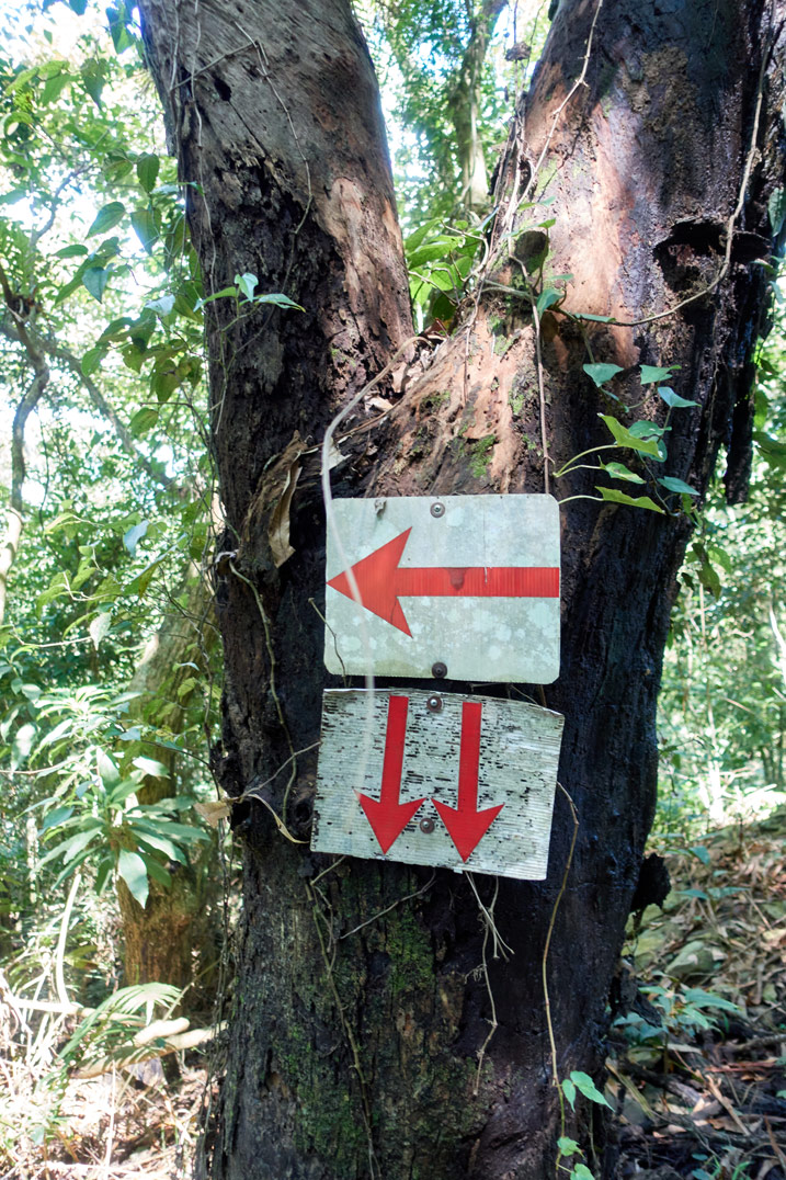 Two signs with red arrows attached to a tree
