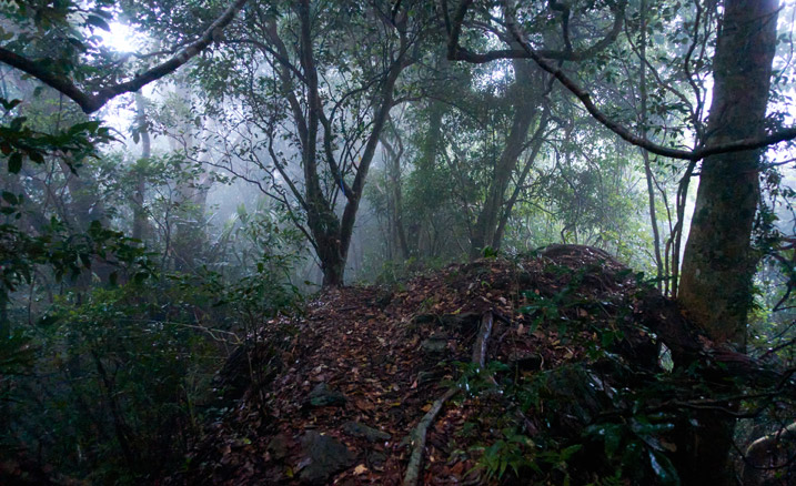 Low lit, foggy mountain trail - many trees