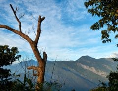 Mountains and blue skies in distance with clouds - dead tree in foreground