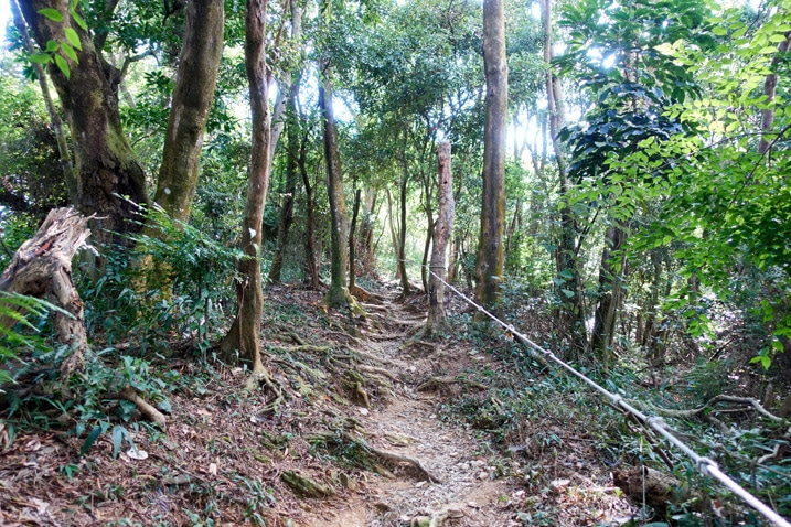 Mountain trail with trees on either side - rope to the right