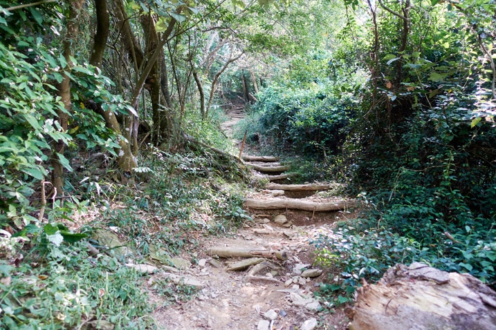 Mountain trail with logs as stairs - trees on either side