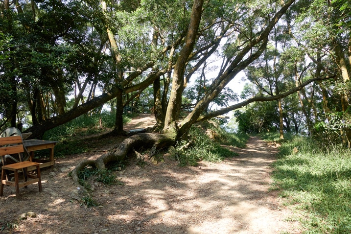 Mountain trail - trees all around - small side trail leading to seating area