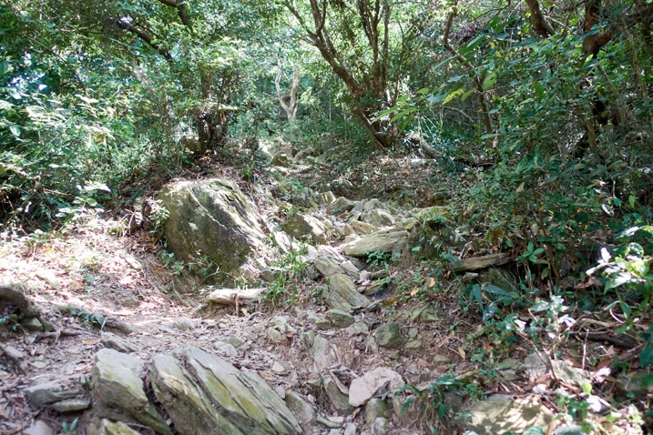 Rocky trail going up mountain - trees around