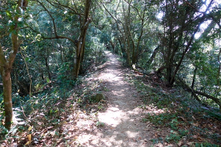 Mountain dirt trail - trees on either side