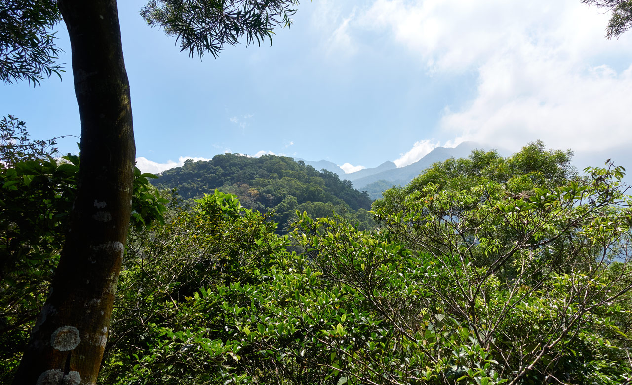 Baibinshan mountain peak and others in the distance - blue sky and clouds - trees in foreground