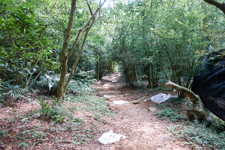 Mountain trail - trees on either side