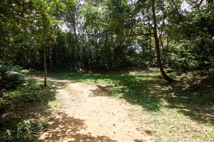 Mountain dirt road turning to the left - grassy area on right - trees all around
