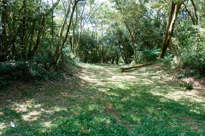Grassy area surrounded by trees