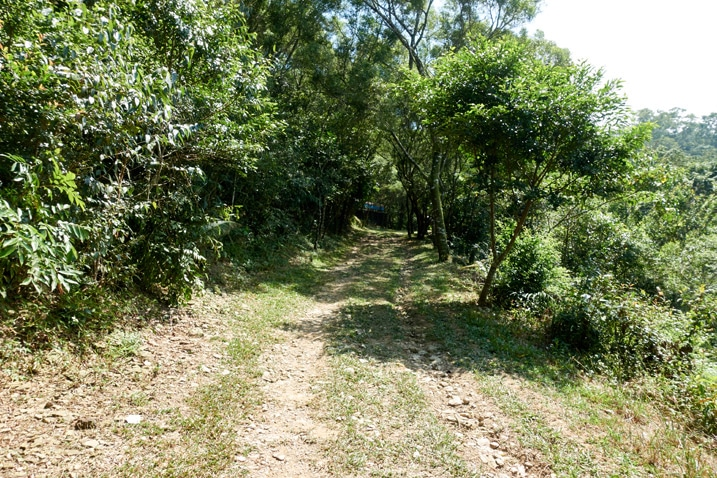 Mountain dirt/grass road - trees on either side