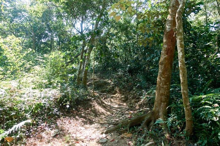 Mountain ridge trail - trees on either side
