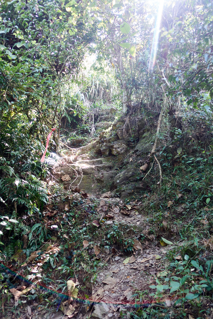 Rocky trail going steeply up mountain - trees and vegetation on either side