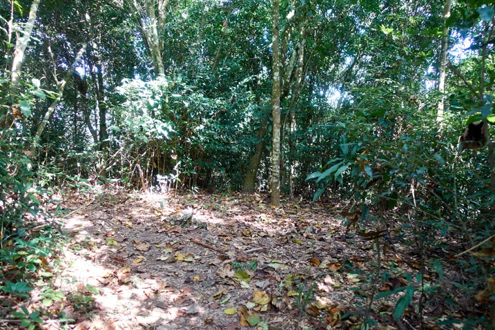 Cleared dirt area surrounded by trees