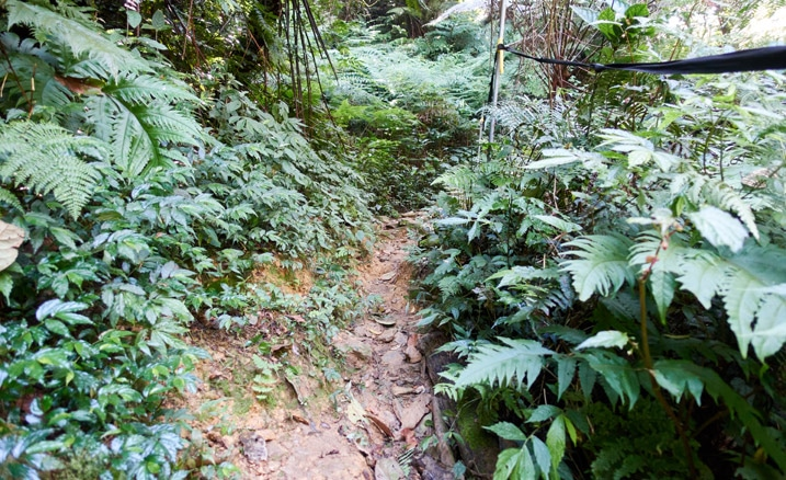Muddy trail with vegetation on either side