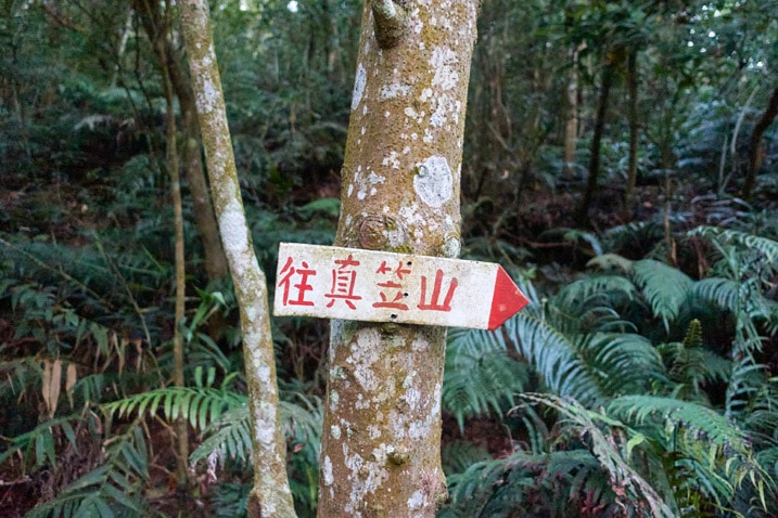 Sign on tree pointing to the right with Chinese characters written on it