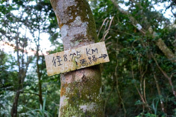 Sign attached to tree with Chinese characters written on it