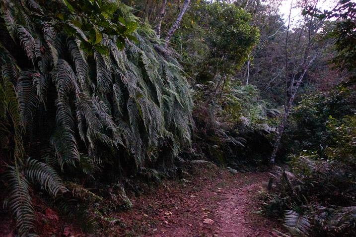 Mountain dirt road near dark - many trees all around
