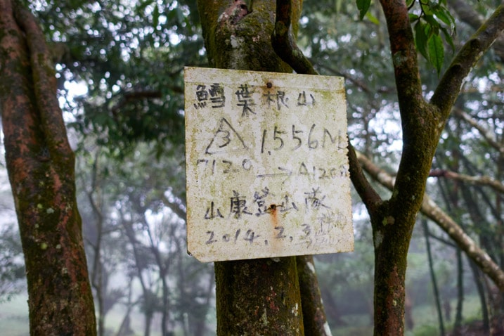White sign with black Chinese characters attached to a tree
