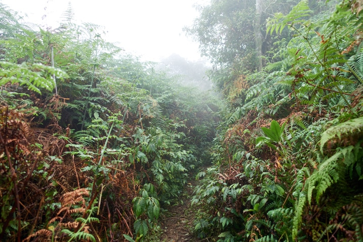 Overgrown mountain ridge with trail in center - foggy