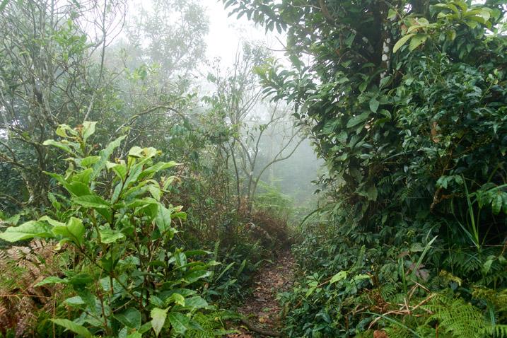 Mountain ridge trail - foggy - trees either side