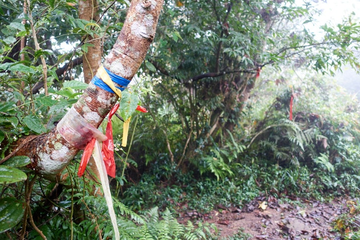 Many colorful ribbons attached to a tree - trail to the right - trees all around