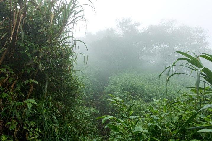 Mountain jungle trail - hardly visible - foggy