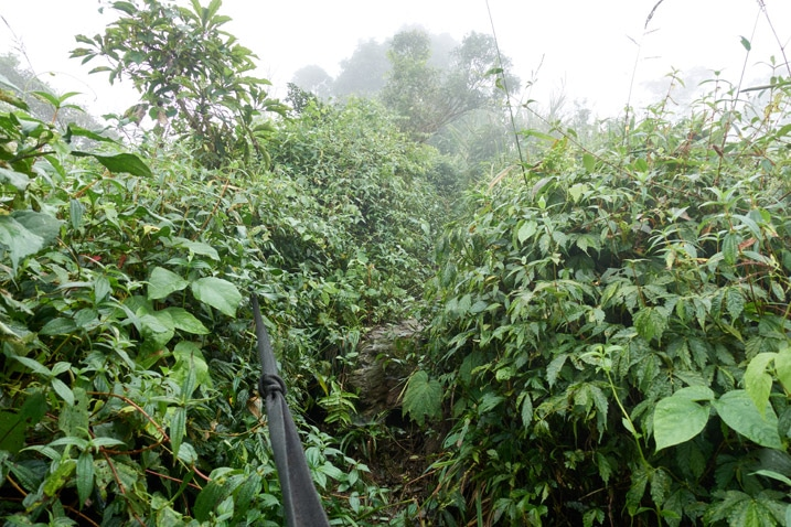 Mountain jungle trail - plants all over - some trees - foggy - rope in center