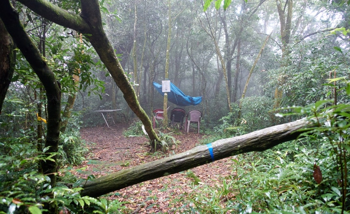 Open area with chairs, tarp, and table - fallen trees - foggy