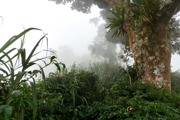 Mountain ridge trail - foggy - large tree on left side - many plants