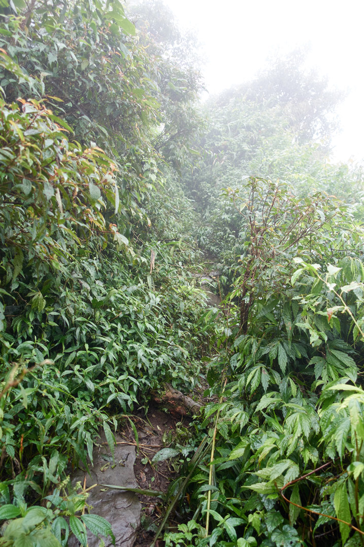 Mountain jungle trail going up - hard to see - foggy - lots of overgrowth