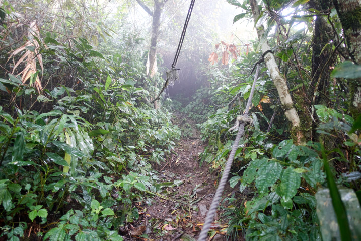 Trail going up with rope to the left - foggy - trees and plants