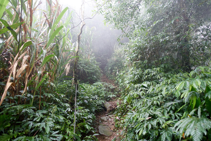 Mountain jungle trail - foggy - trees and vegetation all over